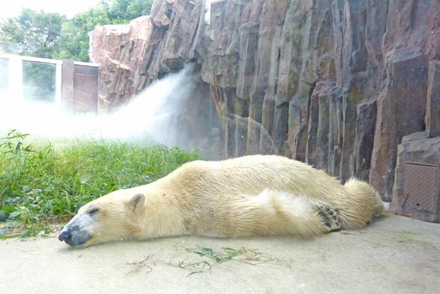 疲れてぐったりした熊